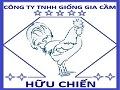 Gà giống Bình Định-Giong ga ta binh dinh
